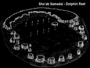 Sha´ab Samadai -Dolphin Reef 5