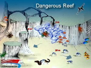 St. Johns Dangerous Reef 2
